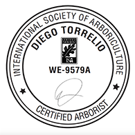 Diego Torrelio is a certified arborist and owner of Circlefoot Permaculture